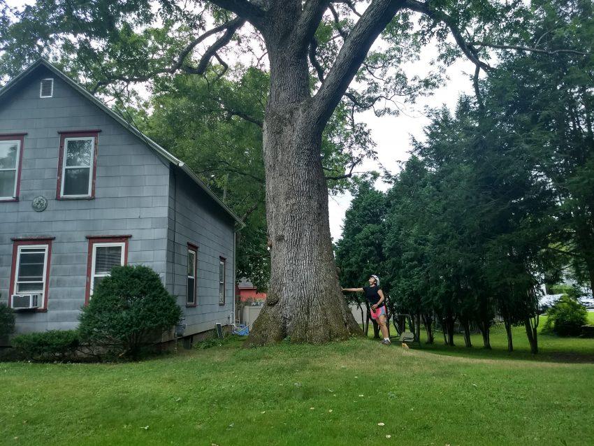 Rider at gigantic tree